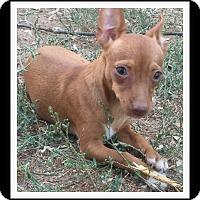 Adopt A Pet :: PIXIE - Winchester, CA