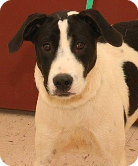 Hound (Unknown Type) Mix Dog for adoption in McDonough, Georgia - Pasta