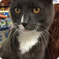 Adopt A Pet :: Saxton - Winchendon, MA