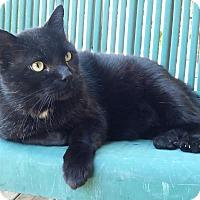 Adopt A Pet :: Dave - Toronto, ON