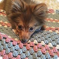 Adopt A Pet :: Grant - Philadelphia, PA