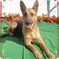 Adopt A Pet :: LILAH - Marietta, GA