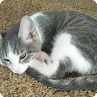 Adopt A Pet :: Princess - McHenry, IL