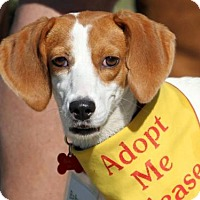 Adopt A Pet :: Baby Girl IV - Tampa, FL