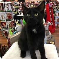 Adopt A Pet :: Grant - Turnersville, NJ