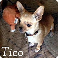 Adopt A Pet :: Tico - Tijeras, NM