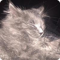 Adopt A Pet :: Meeko - Columbus, IN