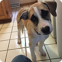 Adopt A Pet :: Stella - Tonawanda, NY