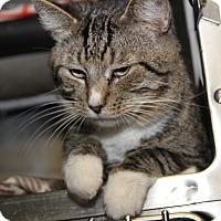 Adopt A Pet :: White Nose (Neutered) - Marietta, OH