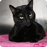 Adopt A Pet :: Tilly (Spayed) - Marietta, OH
