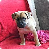 Adopt A Pet :: ATHENA - Loxahatchee, FL