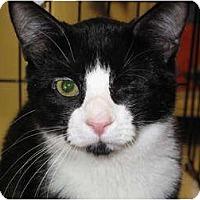 Adopt A Pet :: Timmy - Port Republic, MD