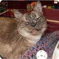 Adopt A Pet :: Puff - Pasadena, CA