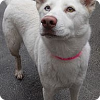 Adopt A Pet :: Husky Mix - Aloha, OR