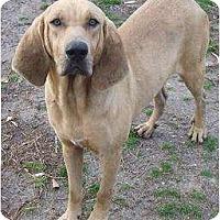 Adopt A Pet :: Willy - Carrollton, GA