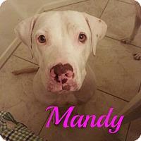 Adopt A Pet :: Mandy - Scottsdale, AZ