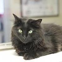 Adopt A Pet :: Stanley - El Cajon, CA