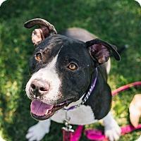 Adopt A Pet :: Annie - Mission Viejo, CA