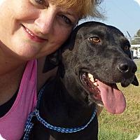 Adopt A Pet :: Tess AD 01-16-16 - Preston, CT