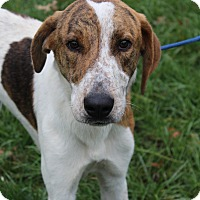 Adopt A Pet :: Bentley - Waldorf, MD