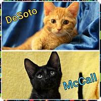 Adopt A Pet :: DeSoto151032 - Atlanta, GA