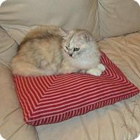 Adopt A Pet :: Natasha - Seminole, FL