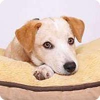 Adopt A Pet :: Fetch - Sudbury, MA