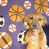 Adopt A Pet :: Malcolm - Oviedo, FL