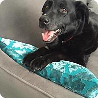 Adopt A Pet :: Princess - Grand Rapids, MI