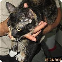 Domestic Shorthair Cat for adoption in Dallas, Georgia - 16-06-1883 Olivia
