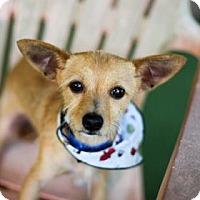 Adopt A Pet :: Timone - Lakeland, FL