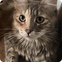 Adopt A Pet :: Jessi - West Des Moines, IA