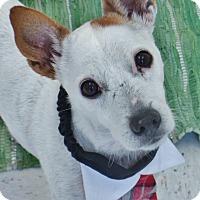 Adopt A Pet :: Benny - Chambersburg, PA