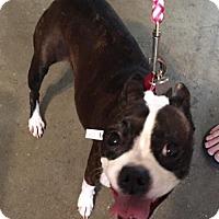 Adopt A Pet :: Tammy - Scottsdale, AZ
