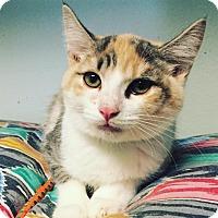 Adopt A Pet :: Ginseng - Westminster, CA