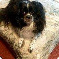 Adopt A Pet :: OREO - Hampton, VA