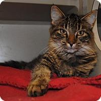 Adopt A Pet :: Kenya - Ridgeland, SC