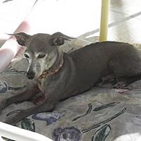 Adopt A Pet :: Rosco - Englewood, FL