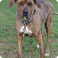 Adopt A Pet :: Dezi - Walla Walla, WA