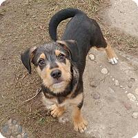 Adopt A Pet :: Korben - Duchess, AB