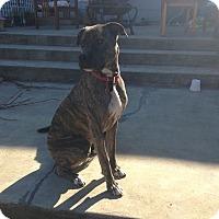 Adopt A Pet :: Bane - Manhattan, KS