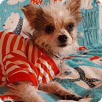 Adopt A Pet :: Mork - Colorado Springs, CO