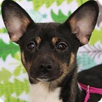 Adopt A Pet :: KARLIE - Red Bluff, CA