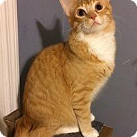 Adopt A Pet :: Harry - O'Fallon, MO
