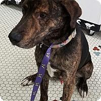 Adopt A Pet :: Mason - Palatine, IL