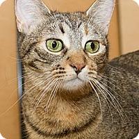 Adopt A Pet :: Lindsay - Irvine, CA