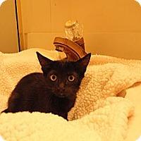 Adopt A Pet :: JITTERBUG - Phoenix, AZ