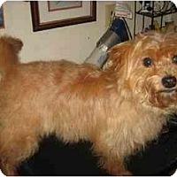 Adopt A Pet :: Archie - Conroe, TX