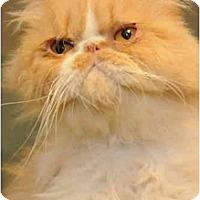 Adopt A Pet :: McGoo - Columbus, OH