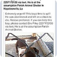 Adopt A Pet :: Petey - Donaldsonville, LA